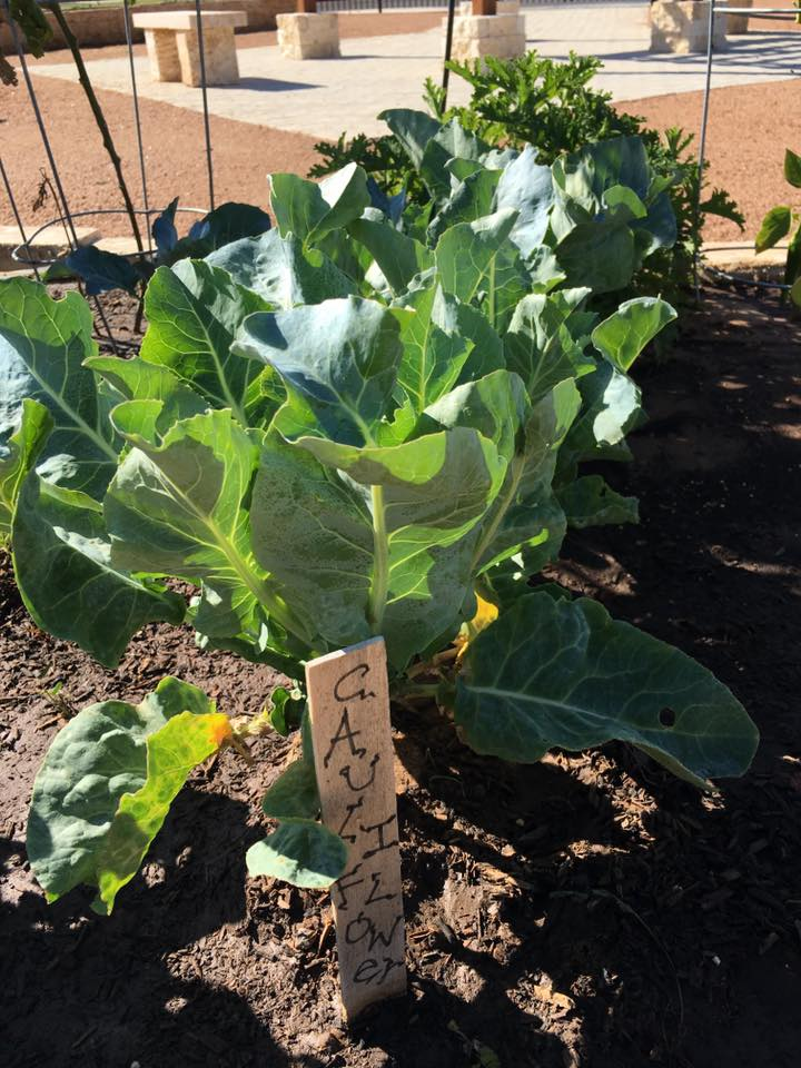 Community Garden Update (2 of 10)