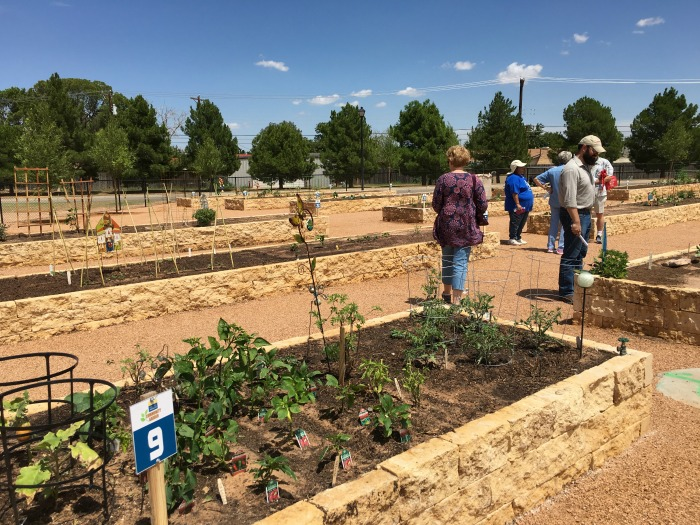 Community Garden Update (4 of 10)