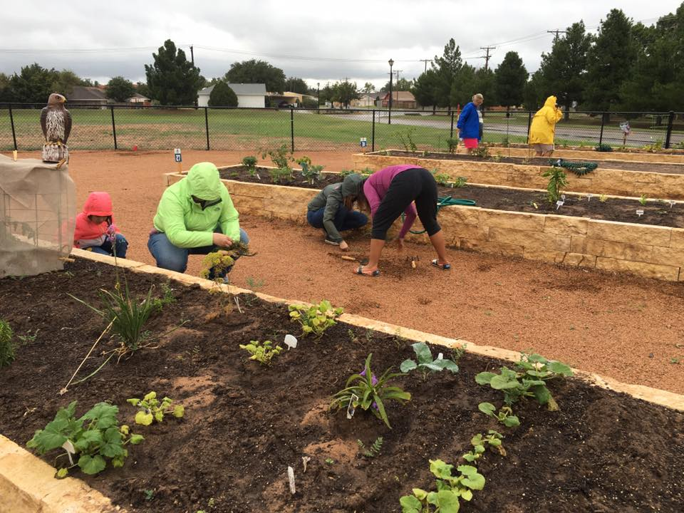 Community Garden Update (8 of 10)